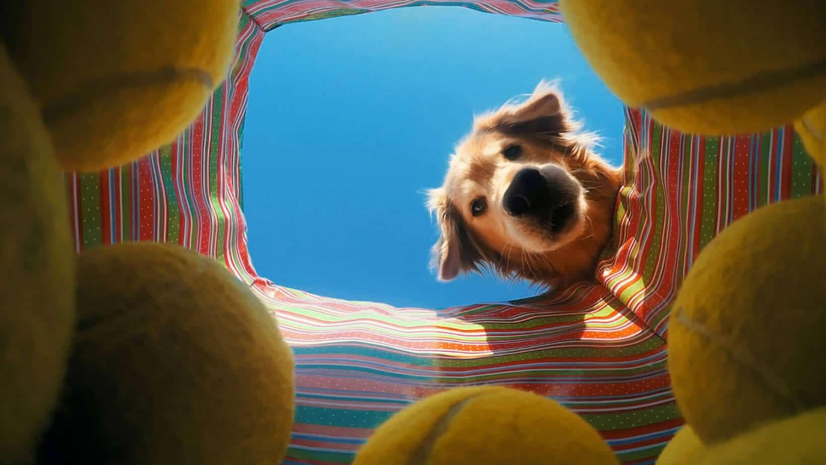 washing tennis balls for pet